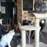 Kočičí kavárna