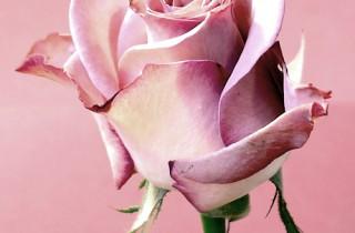 Květinářství NERINE